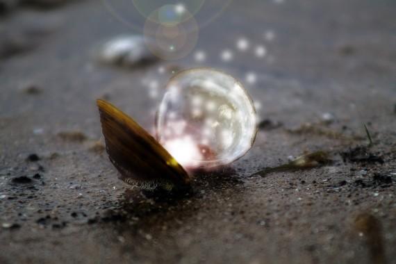 shell-979824_1920